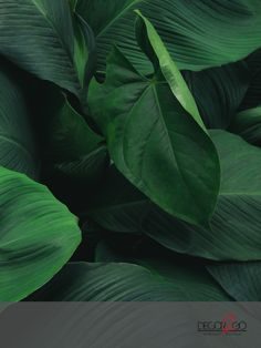 The Tropical Leaves has different greens tropical leaves added artistically to transform your place into a tropical paradise. Green Leaves, Plant Leaves, Amazing Greens, Patterns In Nature, Fresh Green, Tropical Paradise, Tropical Leaves, Garden Art, Sustainable Fashion