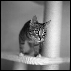 curious kitten!