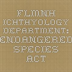 FLMNH Ichthyology Department: Endangered Species Act