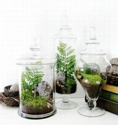 terrarium centerpiece wedding - Google Search by pomona.miguel