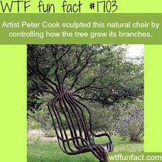 Artist Peter Cook sculpted a natural chair - WTF fun facts