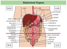 Organs in the Quadrants