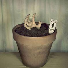 Ruuhkajuna - hauskat kuvat - Naurunappula