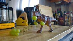 Nälkäinen Rex keittiössämme 03/2014.