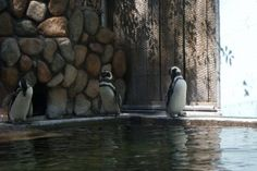 Zoo Boise Boise Tourism and Vacations: 120 Things to Do in Boise, ID | TripAdvisor