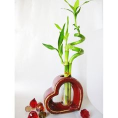 I have one of these lucky bamboo plants, I love it so much - The vase is cute too.