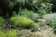 Combination of grasses in Les Jardins du Pays d'Auge (France)