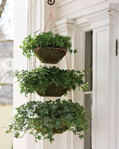 Hanging Wire Baskets containing sheet moss, and two containers of ivy.