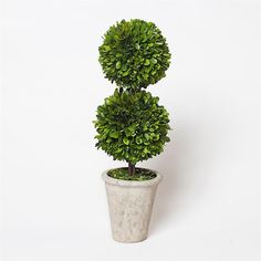 Preserved Boxwood Double Ball Topiary - 20 Inch