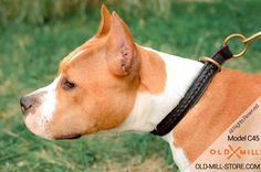 Choke Dog Collar for Amstaff Breed