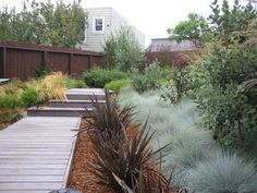 New Zealand flax (Phormiums) centre, blue Festuca to the right.