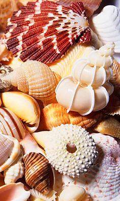 the colors of seashells