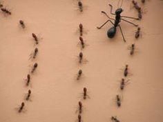 Formigas, moscas, pernilongos e (argh!) baratas… Por mais que a casa esteja um brinco, logo eles aparecem… E tiram a gente do sério. Mas, anime-se! Dá para controlar a invasão desses indesejados visitantes com receitinhas caseiras simples e econômicas: