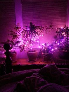Cool 48 Romantic Bedroom Lighting Ideas   Romantic Bedroom Lighting With  Bed Pillow Blanket Nightstand Plant Pot Curtain And Purple Lighting ColorRomantic bedroom   candle lit bed   Romantic Settings   Pinterest  . Romantic Bedroom Candles. Home Design Ideas