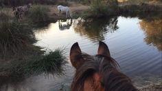 Amazing Doñana #Doñana #doñanawildlife #horseriding #chevalvoyage #turismoecuestre