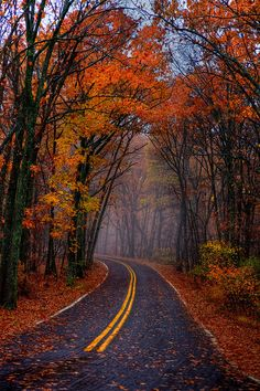 #Road.  Fall 2011 - a rainy fall day in Greensfelder Park - near 6 Flags in St. Louis County.#stlcoparks