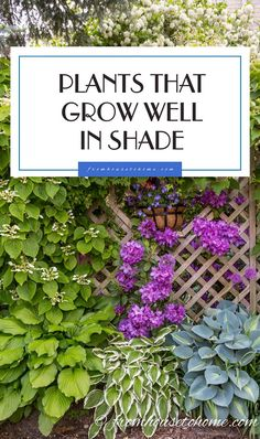 Plants that grow well in shade | If you are looking for plants that grow in shade, this list of the best shade loving perennial shrubs, flowers and vines will help you find the plants you want.