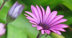 Splash of purple ... :-))