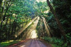 Raios de Sol através das árvores em floresta de Rio Claro/SP.