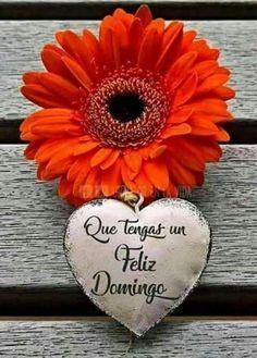 Feliz domingo bendiciones para todos 92 - BonitasImagenes.net