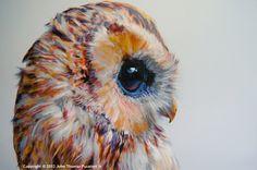 http://www.amoantix.com/wp-content/uploads/2012/11/coruja-5.jpg