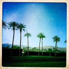 Palm Desert Desert Oasis, Palm Desert, Desert Colors, Coachella Valley, Places Ive Been, Travel Inspiration, Stuff To Do, Deserts, Spaces