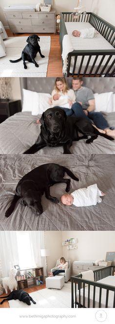 dog with newborn pose ideas | lifestyle newborn session | in home newborn session | newborn photographer boston