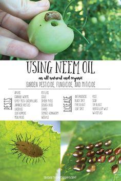 using neem oil in the garden