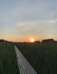 Der Weg zur Seehütte Rust am Neusiedlersee. Mieten Sie Ihre private Seehütte in Rust. Für maximal 6 Personen. Celestial, Sunset, Outdoor, Stilt House, Sunsets, Outdoors, Outdoor Living, Garden