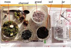 Terrariums 101. basics, materials, nifty ideas for different containers (lightbulbs, syrup dispenser, glass jug, etc)