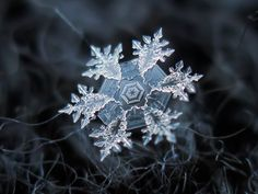 Russian photographer Alexey Kljatov takes stunning close-ups of snowflakes.