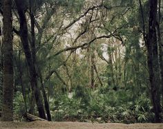 Forest, Titusville, 2013