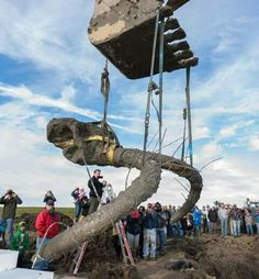 Mammoth skull and tusk found in Michigan while installing a drainage pipe