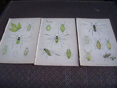 3 Vintage Insect Prints from a 1888 by trufflepigtreasures on Etsy, $4.00