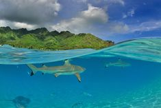 French Polynesia, Moorea, Tiahura (photo by Bru Gregory for National Geographic Traveler Photo Contest)