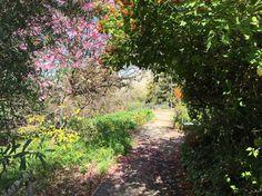 UCR Botanic Gardens - Exploring So Cal