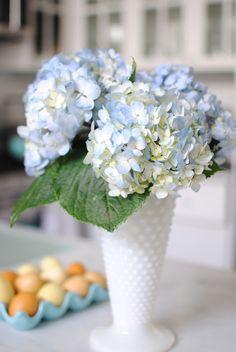 hydrangea in milk glass
