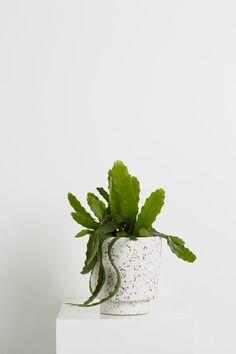 house plant, minimalistic flower pot, white plant pot, minimalism, minimalistic home decor Cacti And Succulents, Potted Plants, Indoor Plants, Terrazzo, Best Desk Plants, Bonsai, Metal Plant Stand, Plant Aesthetic, White Plants