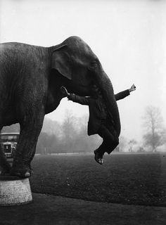 21 Unbelievably Haunting Vintage Photos From The Circus - Dixie the elephant from Whipsnade Zoo performs part of her repertoire with her keeper George Braham. Vintage Circus Photos, Vintage Carnival, Vintage Pictures, Vintage Photographs, Vintage Images, Old Circus, Circus Art, Creepy Photos, Strange Photos