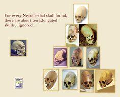 Elongated Skulls #aliens #skull