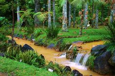 A view of the enchanting Terra Nostra Park in Furnas, S. Miguel island - Azores.com #Portugal