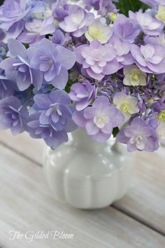 The Changing Color of Hydrangeas
