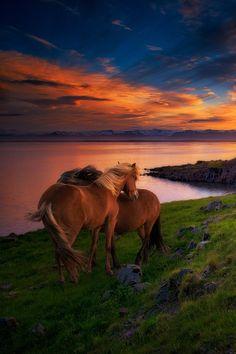 sublim-ature:  Stokksnes, IcelandRyan Buchanan