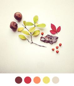 Color Charts to help find you the right colors for your project
