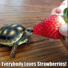 Everybody loves strawberries