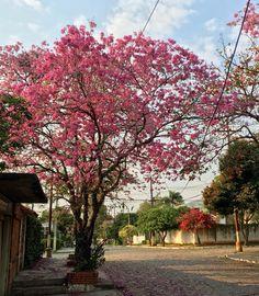 Una calle florida. Asunción-Paraguay