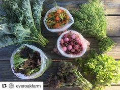 """Edible Orlando on Instagram: """"Looking for produce? Buying locally grown is the safest, smallest supply chain you'll find. Farmer, consumer. That's it. It's safe…"""" Whats In Season, Supply Chain, Orlando, Farmer, Cabbage, Instagram Images, Seasons, Photo And Video, Vegetables"""