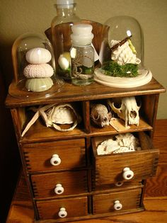 """Must figure out how to display my """"specimens"""" in an interesting, non-creepy way. This helps"""