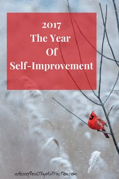 Wow- 2017 rolled in really quickly! Instead of focusing on just New Years Resolutions, lets focus on general self-improvement. Here are some manageable ideas to get us started.
