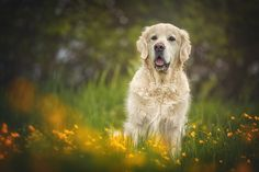 beautiful golden II by Danny Block - Photo 155159023 - 500px